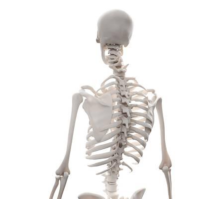 Skeleton, Artwork Art Print by Andrzej Wojcicki