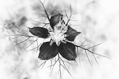 Skeleton Flower Art Print by Michael Ambrose