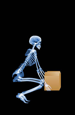 Skeleton Lifting A Box Correctly Print by D. Roberts