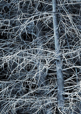 Photograph - Skeleton Tree by Judi Bagwell