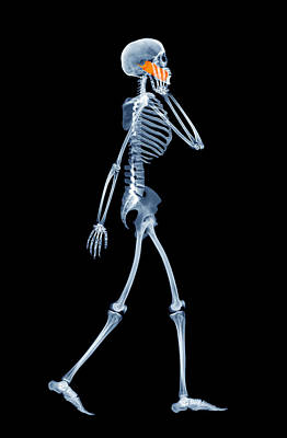 False Motion Photograph - Skeleton Using A Mobile Phone by D. Roberts