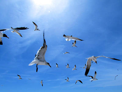 Photograph - Skimmers And Seagulls And Terns  Oh My by Judy Wanamaker