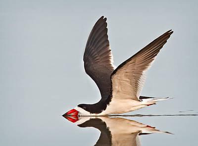 Photograph - Skimming Away by Susan Candelario