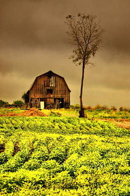 Farm Scenes Photograph - Skinny Tree by Emily Stauring
