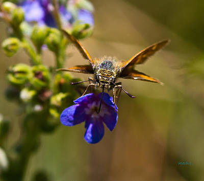 Moody Trees - Skipper by Mitch Shindelbower