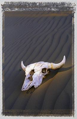 Skull In Desert Art Print
