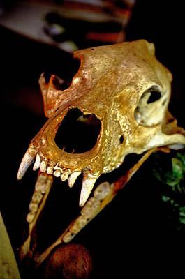 Skull In The Dark Art Print by Swainson Holness