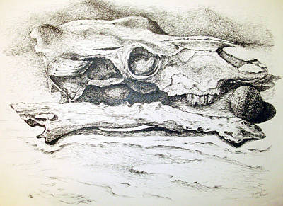 Drawing - Skull by Shelley Bain
