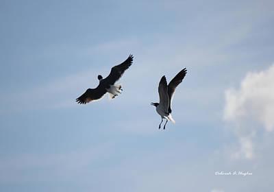 Photograph - Sky Dance by Deborah Hughes