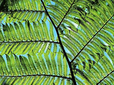 Photograph - Sky Through Tree Fern by Michele Penner