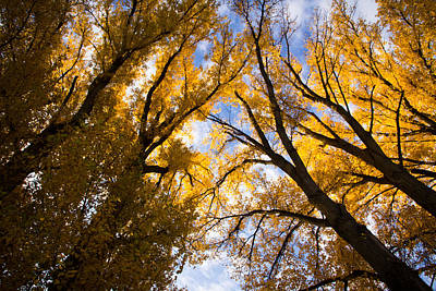 Photograph - Skyward In Autumn by Justin Albrecht