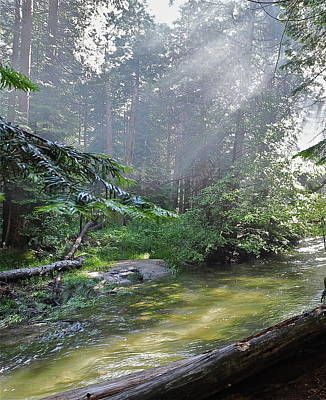 Art Print featuring the photograph Slanting Sunlight On River by Kirsten Giving