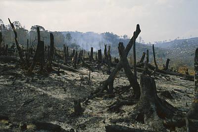 Slash And Burn Agriculture, Where Art Print by Konrad Wothe