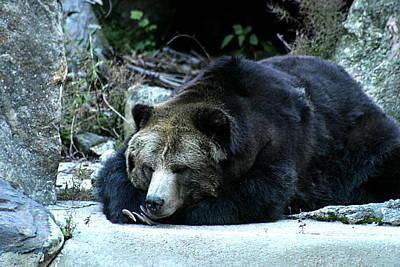 Photograph - Sleeping Bear by Emanuel Tanjala
