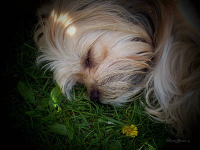 Puppies Digital Art - Sleeping Beauty by Robert Orinski