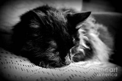 Photograph - Sleeping Bob by J Kinion