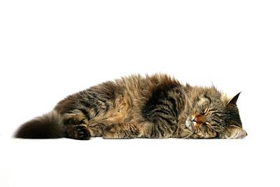 Eyes Closed Photograph - Sleeping Cat by © Nico Piotto