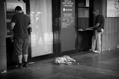 Atm Machine Photograph - Sleeping Dog by Hugh Smith