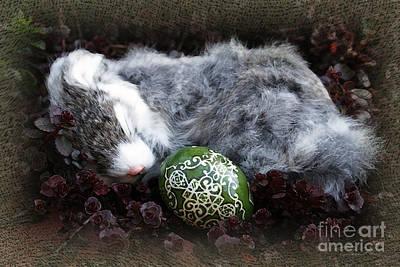 Photograph - Sleeping Easter Bunny by Danuta Bennett