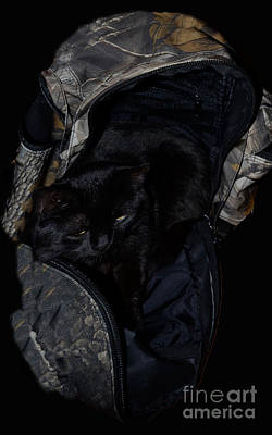 Photograph - Sleeping In My Backpack  by Donna Brown