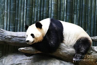 Sleeping Panda Art Print