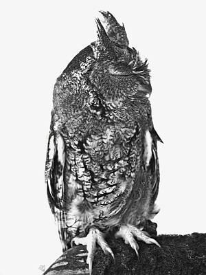 Photograph - Sleeping Screech Owl by Barbara Middleton