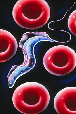 Sleeping Sickness Parasite Art Print by John Bavosi
