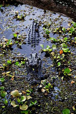 Sleepy Alligator Art Print by Luis and Paula Lopez