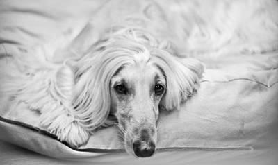Photograph - Sleepy Beauty by Asta Viggosdottir