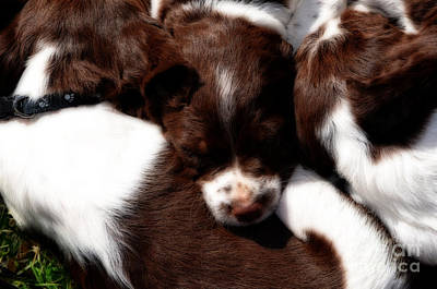 Photograph - Sleepy Puppies by Donna Greene