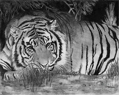 Drawing - Sleepy Tiger by Christian Conner