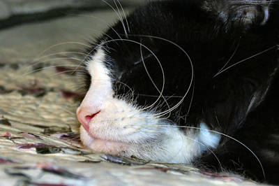 Witch Halloween Cat Wicca Photograph - Sleepytime by Art Dingo