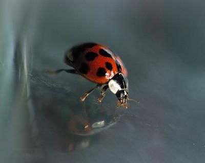 Ladybug Wall Art - Photograph - Slip And Slide by Susan Capuano