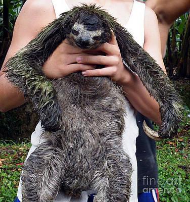 Sloth Art Print by Vicky Tarcau