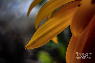Photograph - Small Details by Cris Hayes