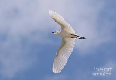 Art Print featuring the photograph Small Egret Flying Over The House by John  Kolenberg