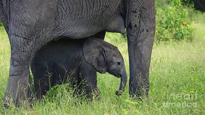 Photograph - Small Elephant by Mareko Marciniak