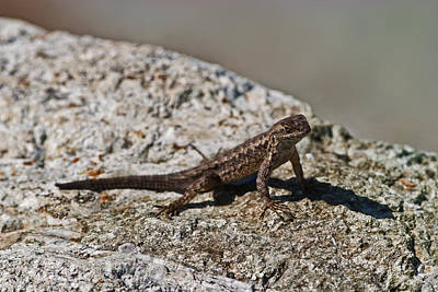Photograph - Small Lizard by Gregory Scott