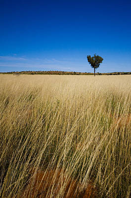 Y120817 Photograph - Small Single Tree In Field by Universal Stopping Point Photography