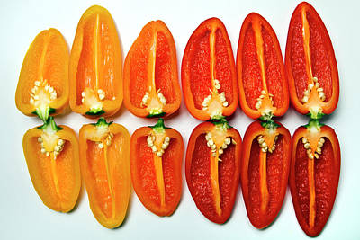 In A Row Photograph - Small Sweet Peppers by Image by Catherine MacBride