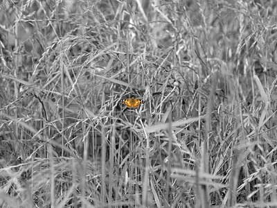 Photograph - Small Touch Of Butterfly by James Granberry