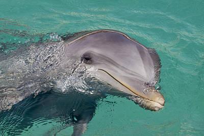 Smiling Atlantic Bottlenose Dolphin Art Print by Dave Fleetham