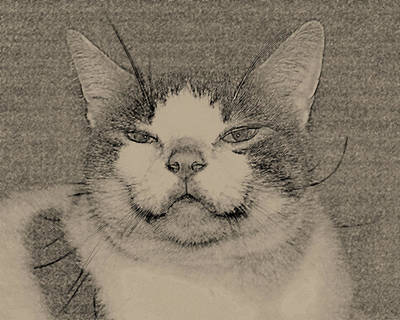 Photograph - Smiling Cat by Barry Doherty