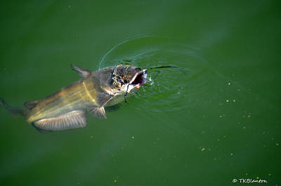Photograph - Smiling Catfish by Teresa Blanton