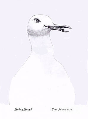 Smiling Seagull Art Print by Fred Jinkins