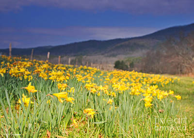Photograph - Smoky Mountain National Park Daffodil Spring by Nature Scapes Fine Art