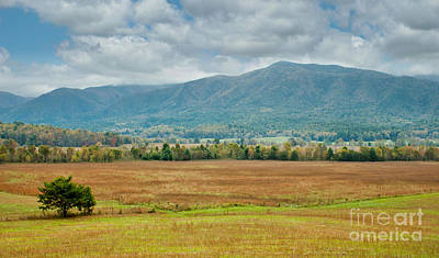 Photograph - Smoky Mountains In Cades Cove by Lena Auxier