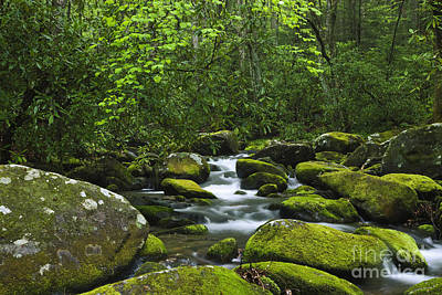 Photograph - Smoky Mountains Waterfall by Dennis Flaherty and Photo Researchers
