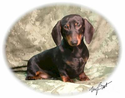 Dachshund Puppy Digital Art - Smooth Dachshund Doxie Pup by Maxine Bochnia