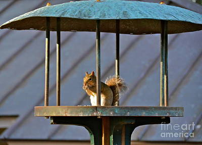 Photograph - Snack Time by Carol  Bradley